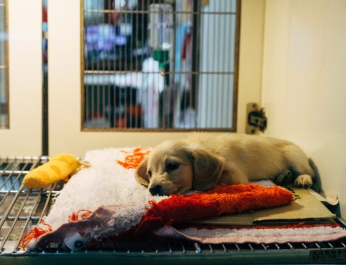 How Can Municipalities Help Animal Shelters?