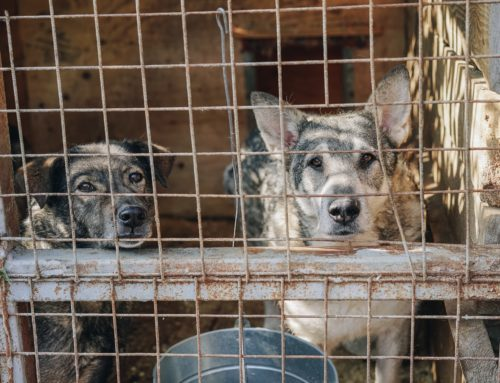 How Animal Control Can Use Pet Data